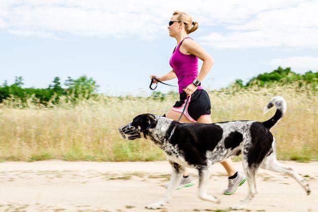 Jak běhat se psem. Začínáme s canicrossem