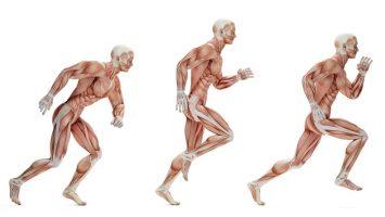 Jaké svaly zapojuje běh